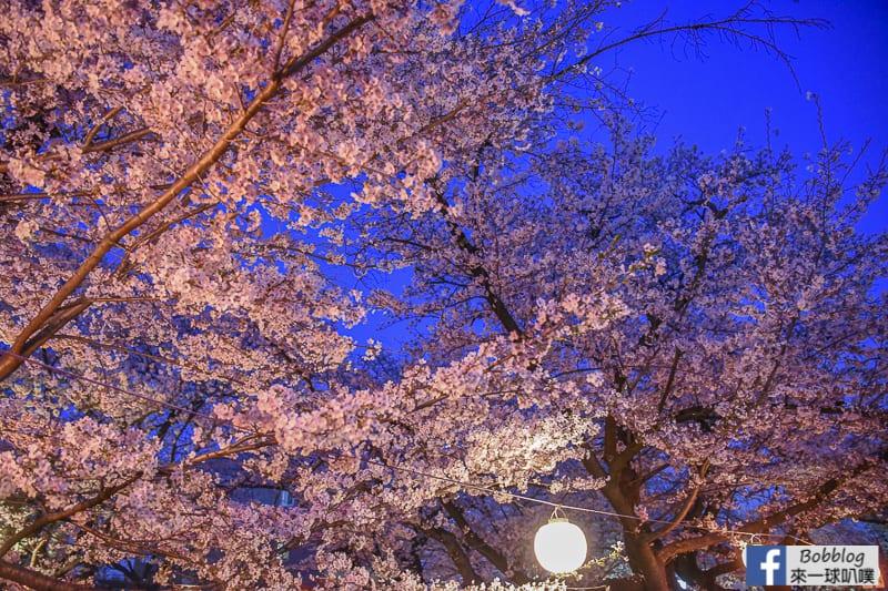 Hikawa Shrine 34