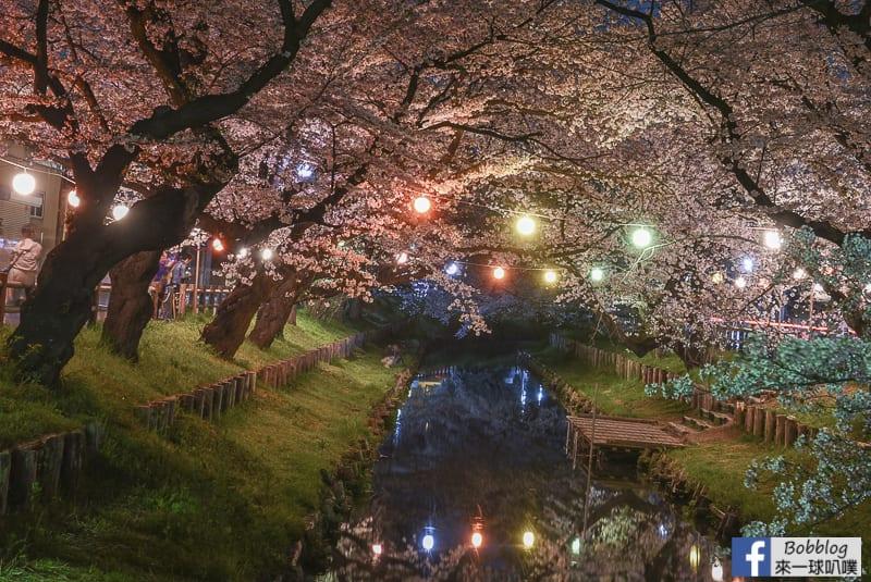 Hikawa Shrine 40