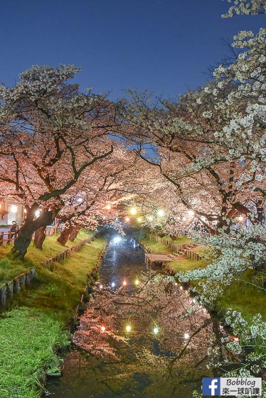 Hikawa Shrine 42