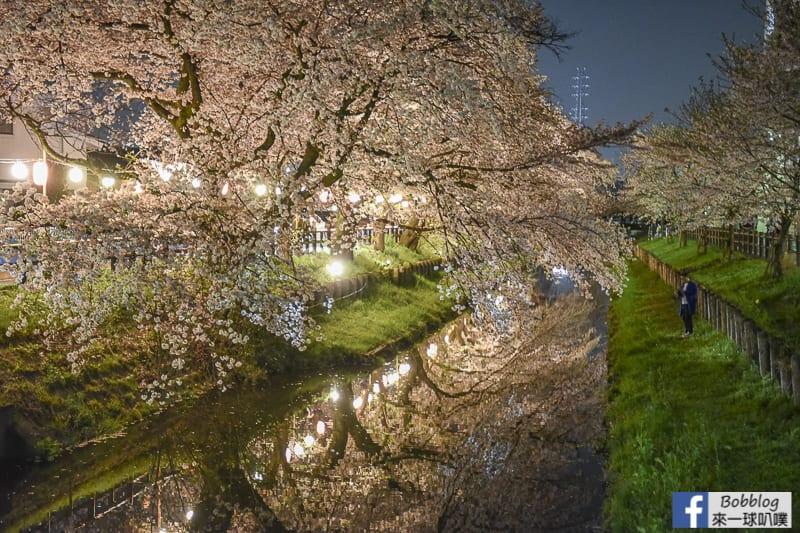 Hikawa Shrine 44