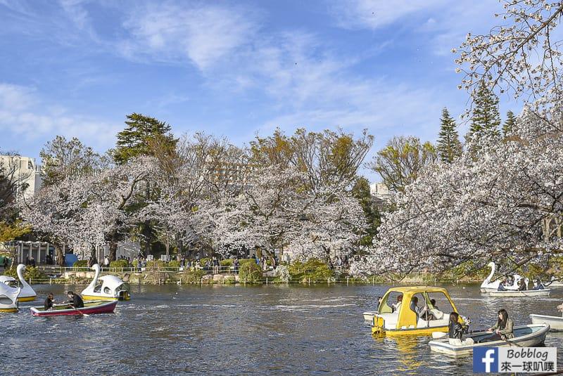 Inokashira Onshi Park sakura 19