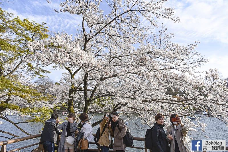 Inokashira Onshi Park sakura 2