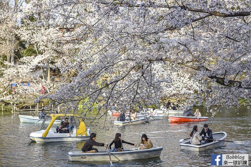 Inokashira Onshi Park sakura 20