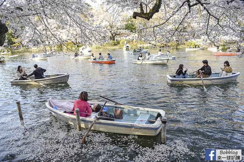 Inokashira Onshi Park sakura 22