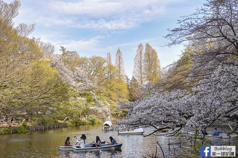 Inokashira Onshi Park sakura 27