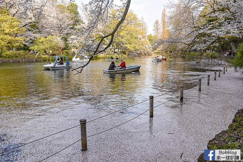 Inokashira Onshi Park sakura 28