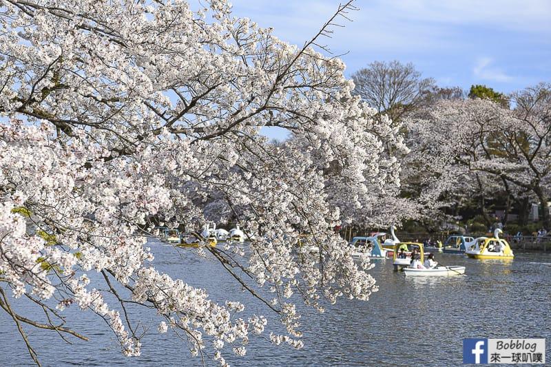 Inokashira Onshi Park sakura 3