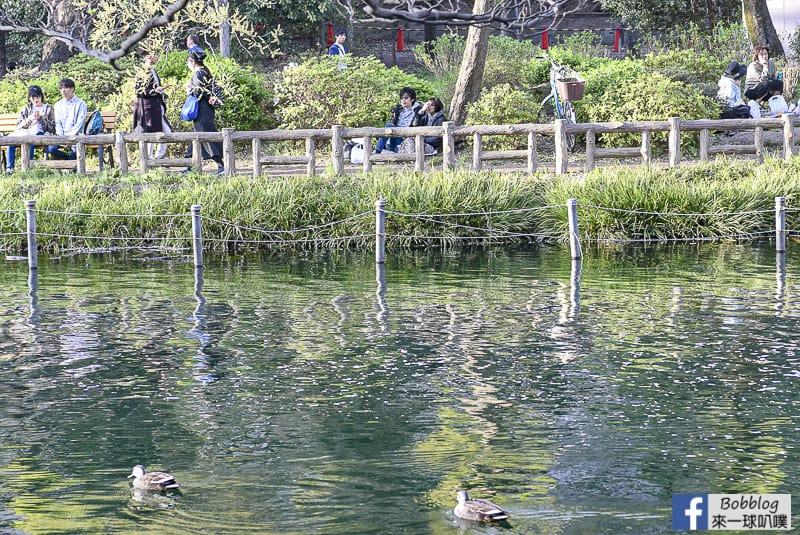 Inokashira Onshi Park sakura 31