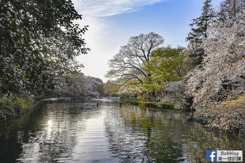 Inokashira Onshi Park sakura 32