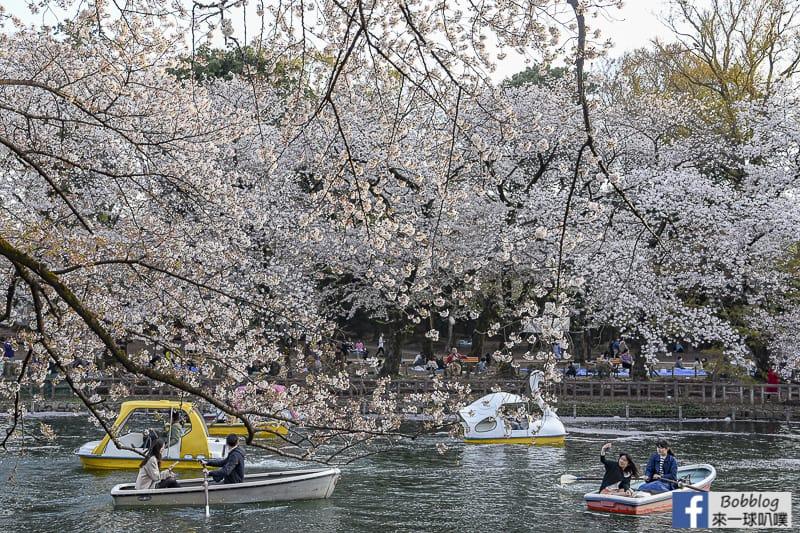 Inokashira Onshi Park sakura 36