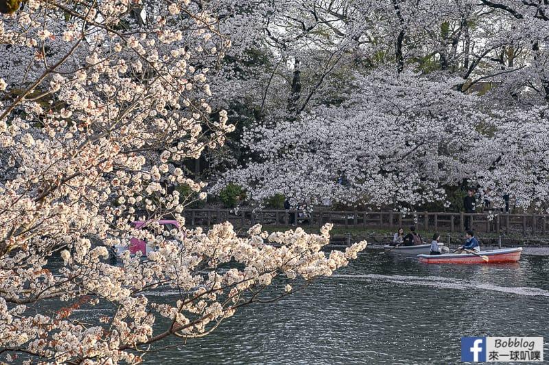 Inokashira Onshi Park sakura 38