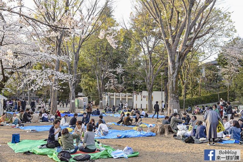 Inokashira Onshi Park sakura 39