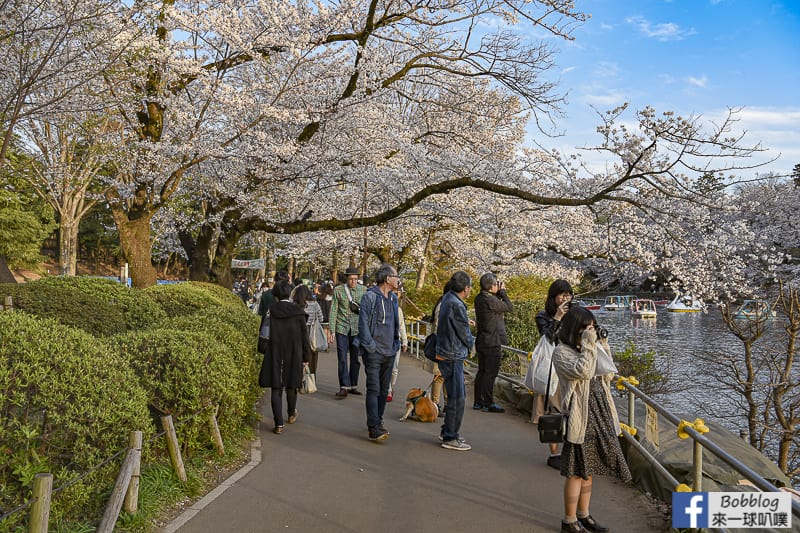Inokashira Onshi Park sakura 41