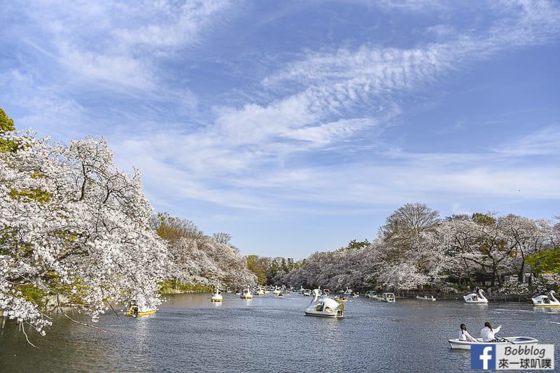 Inokashira Onshi Park sakura 5