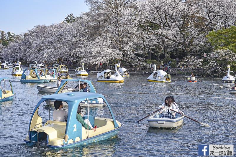 Inokashira Onshi Park sakura 7