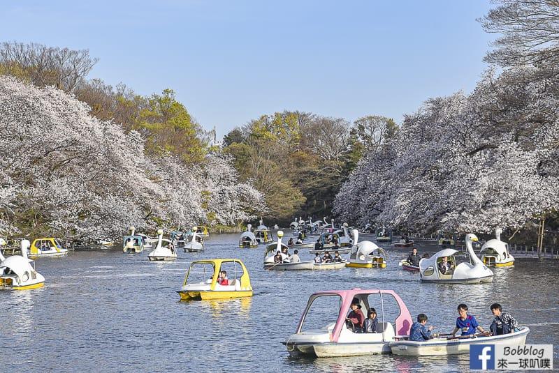Inokashira Onshi Park sakura 9