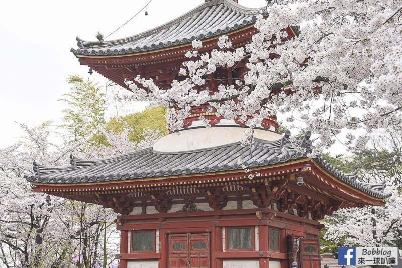 Kitain Temple sakura 18
