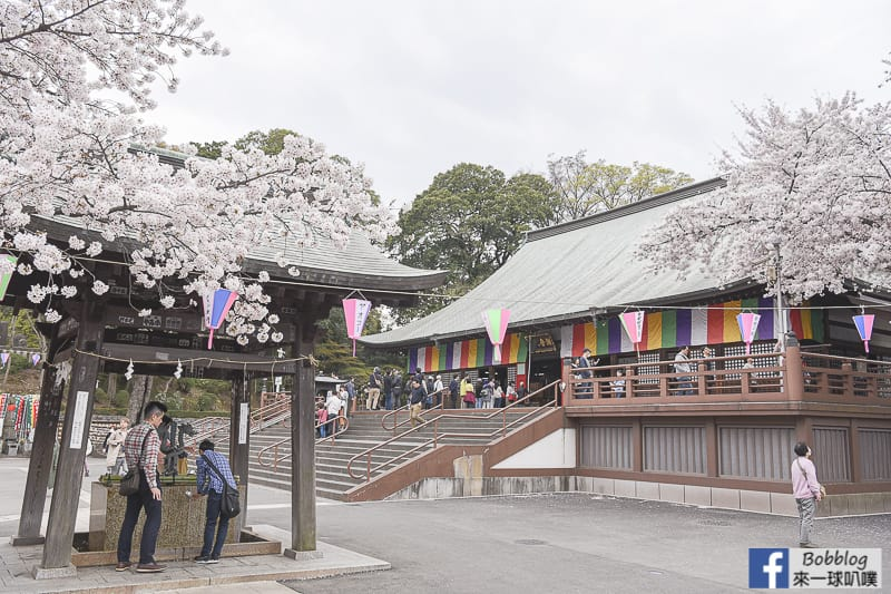 Kitain Temple sakura 23
