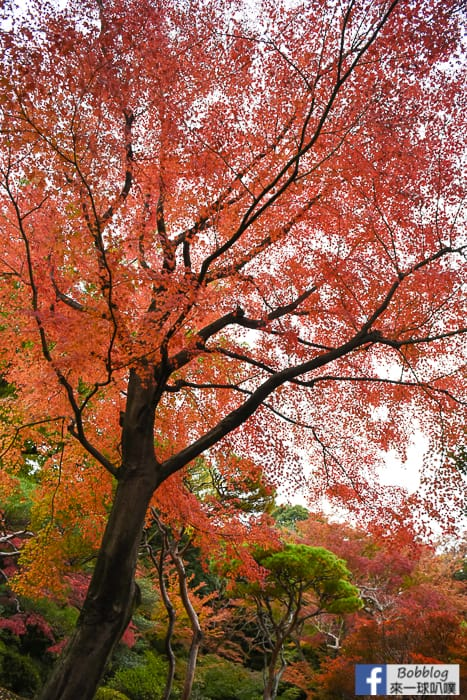 Kyu-Furukawa-Gardens-18