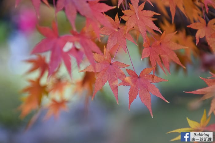 Kyu-Furukawa-Gardens-37
