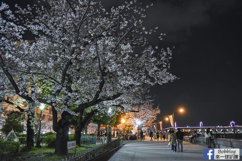 Sumida gawa night sakura 12