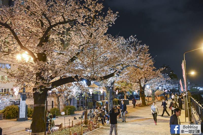 Sumida gawa night sakura 16