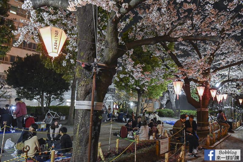 Sumida gawa night sakura 19