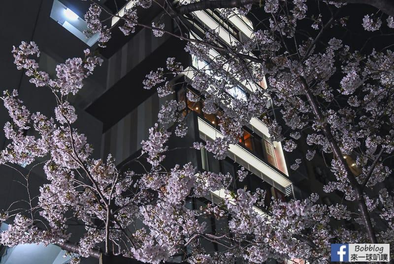 Sumida gawa night sakura 27