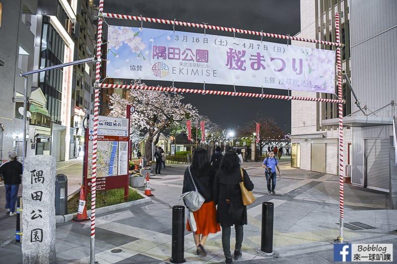 Sumida gawa night sakura