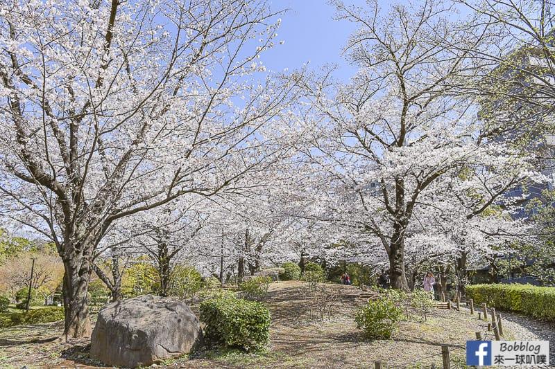Sumida gawa sakura 22