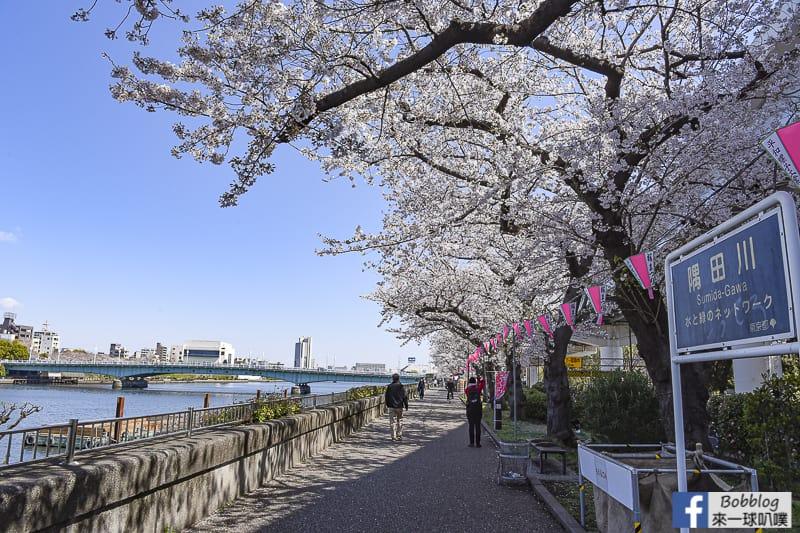 Sumida gawa sakura 35
