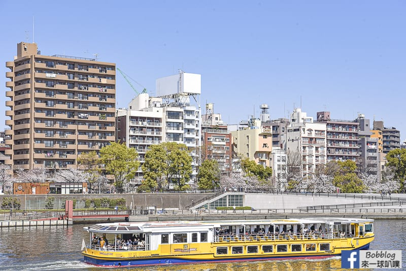 Sumida gawa sakura 37