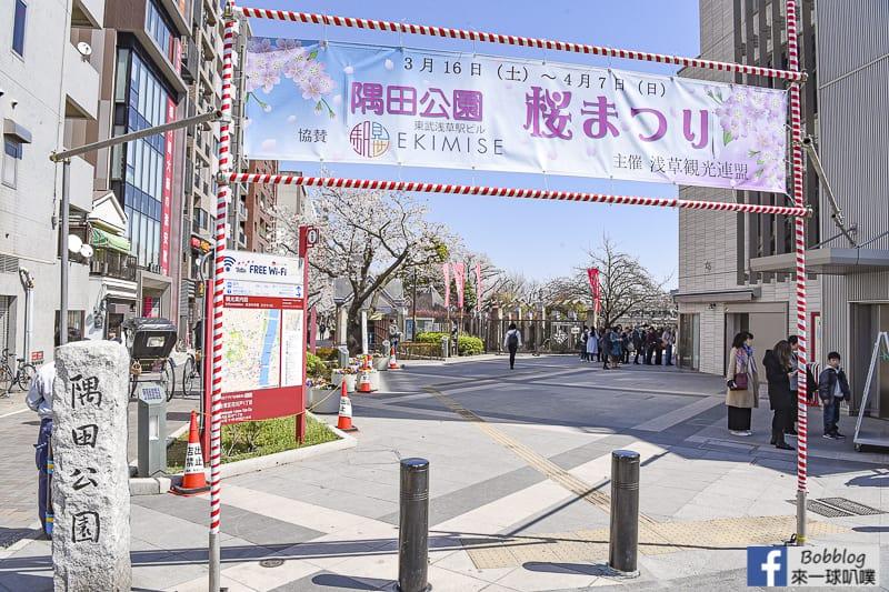 Sumida gawa sakura 49