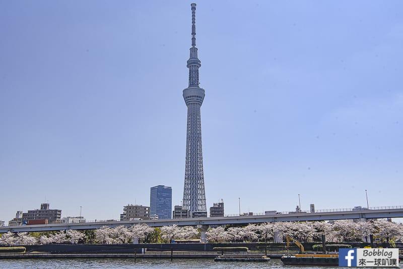 Sumida gawa sakura 62