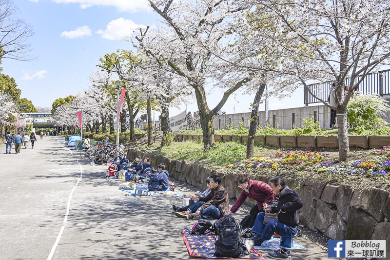 Sumida gawa sakura 63