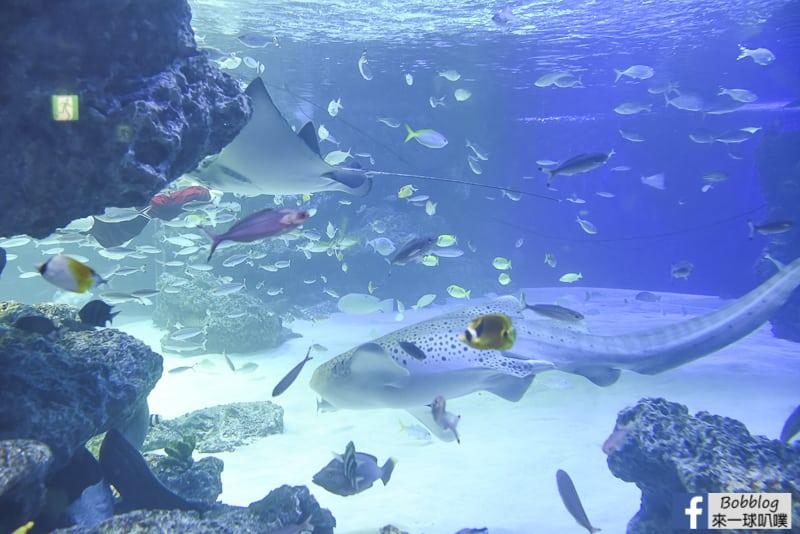 Sunshine-Aquarium-23