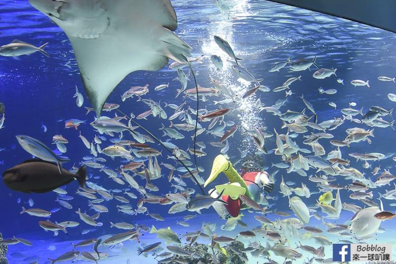 延伸閱讀:東京池袋親子景點|太陽城陽光水族館(可愛企鵝海獅海洋魚類)