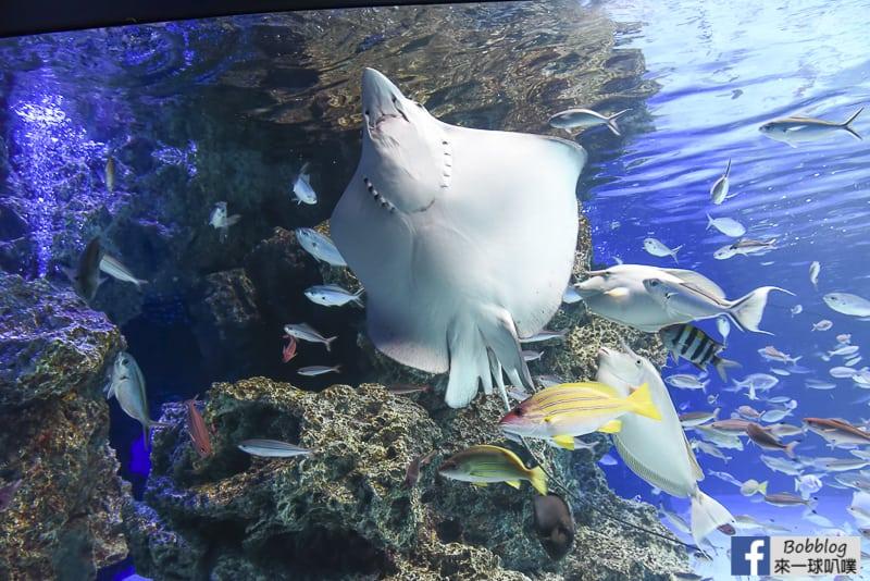 Sunshine-Aquarium-29