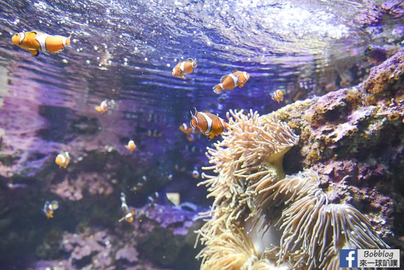 Sunshine-Aquarium-45
