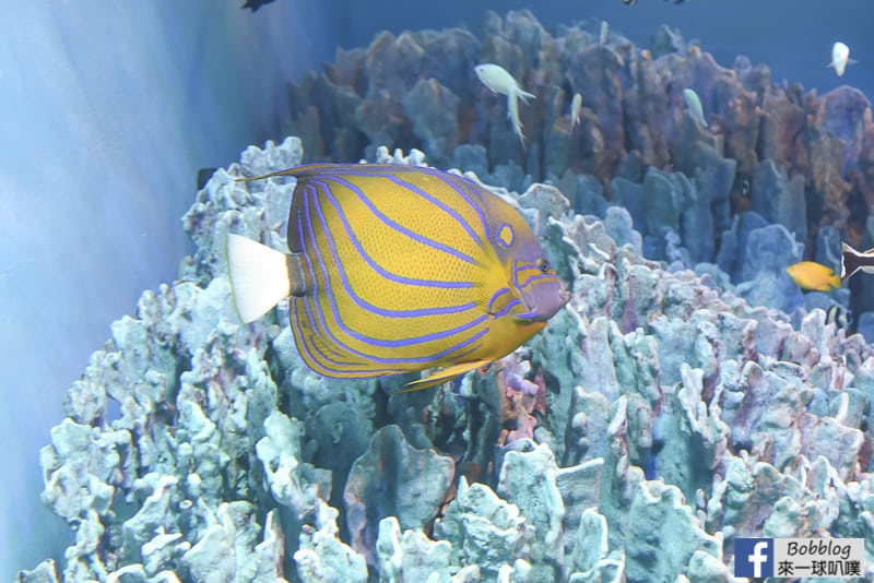 Sunshine-Aquarium-51