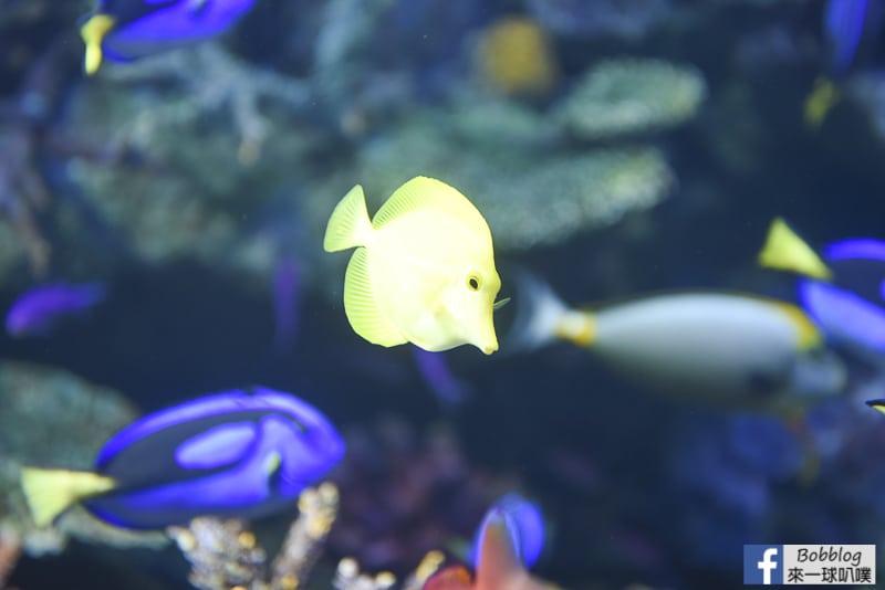 Sunshine-Aquarium-53