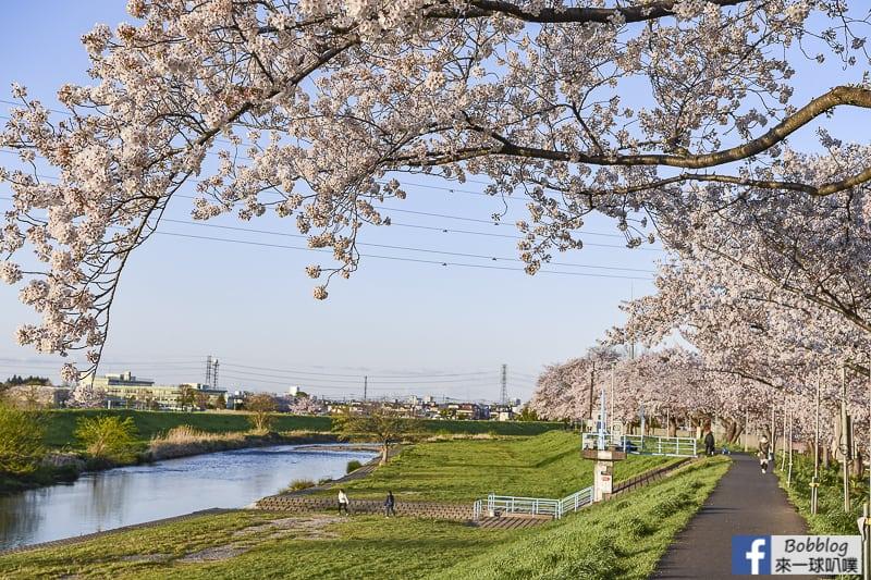 Yanasegawa Sakura 11
