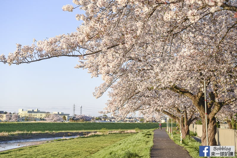 Yanasegawa Sakura 17