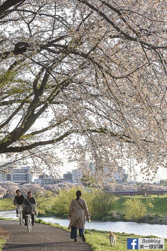 Yanasegawa Sakura 24