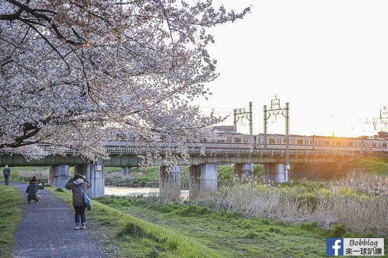 Yanasegawa Sakura 33