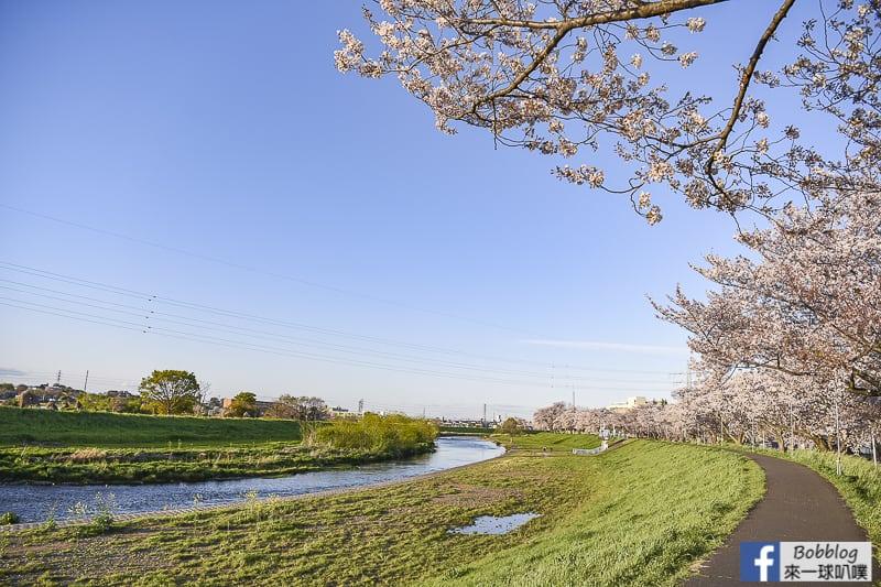 Yanasegawa Sakura 7