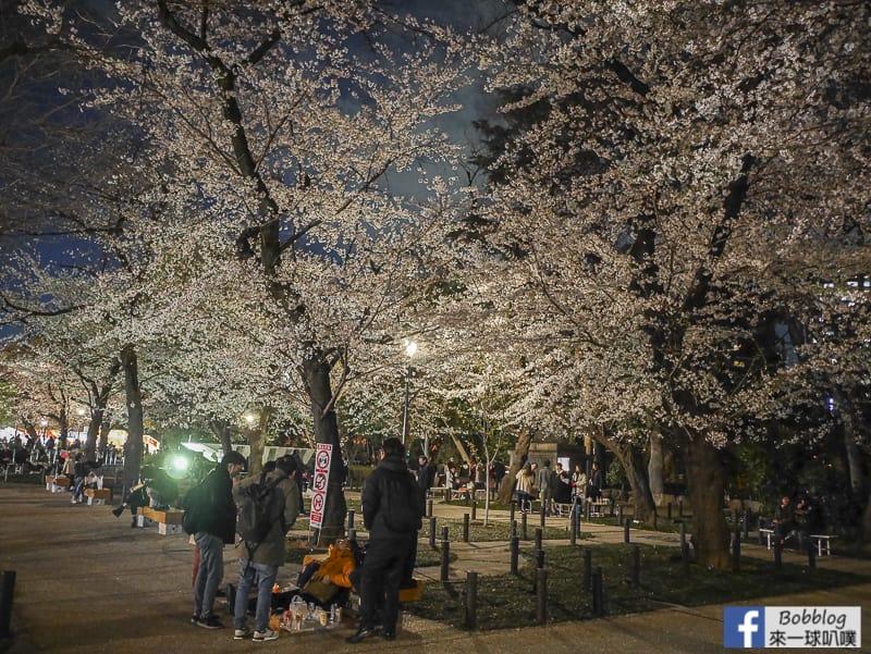 Yasukuni Shrine night sakura 3