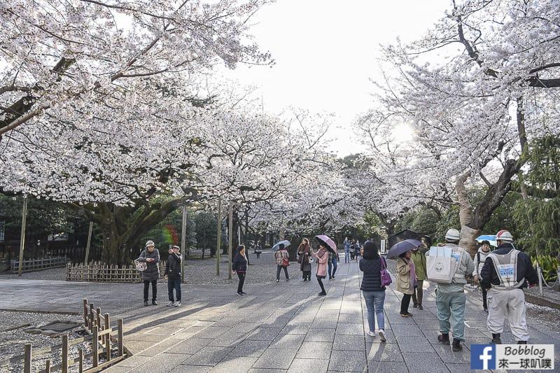 Yasukuni Shrine sakura 17