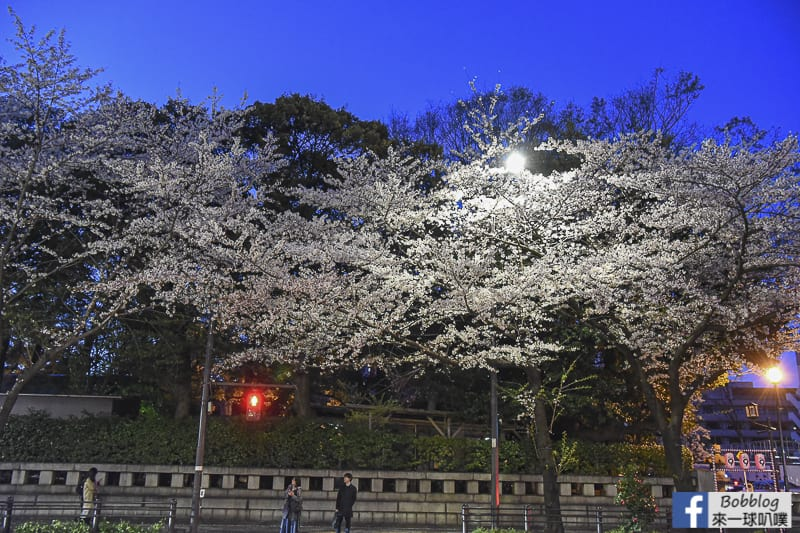 Yasukuni Shrine sakura 34