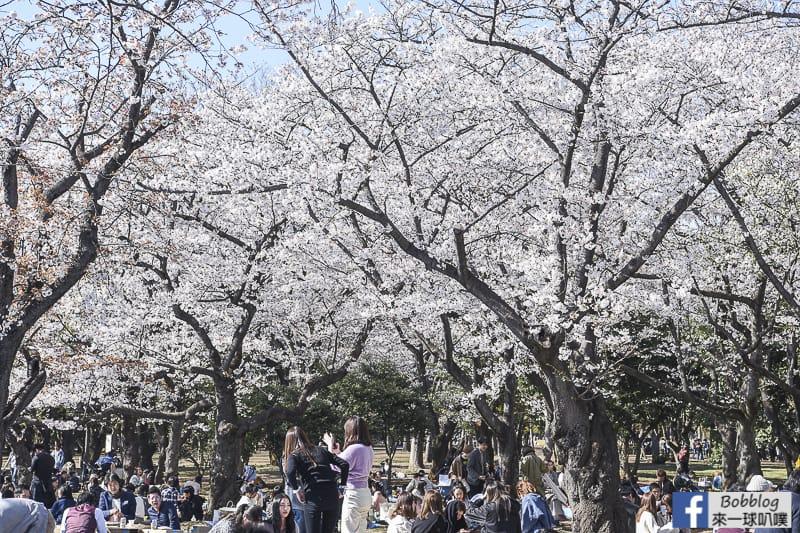 Yoyogi Park sakura 10